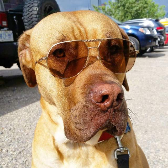 BUGATTI EB 502 vintage sunglasses cityplacedogs