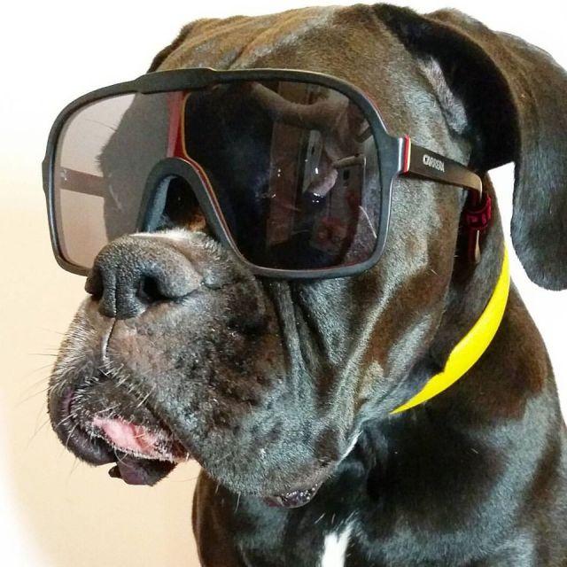 og-carrera-skiman 5530 vintage sunglasses ski mask