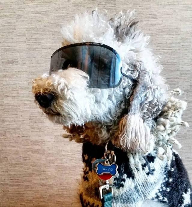 porsche design by carrera 5620 vintage sunglasses jarvis city place dogs