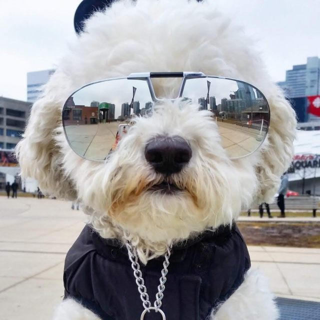 marley cityplacedogs toronto christian dior 2151 1980s vintage sunglasses