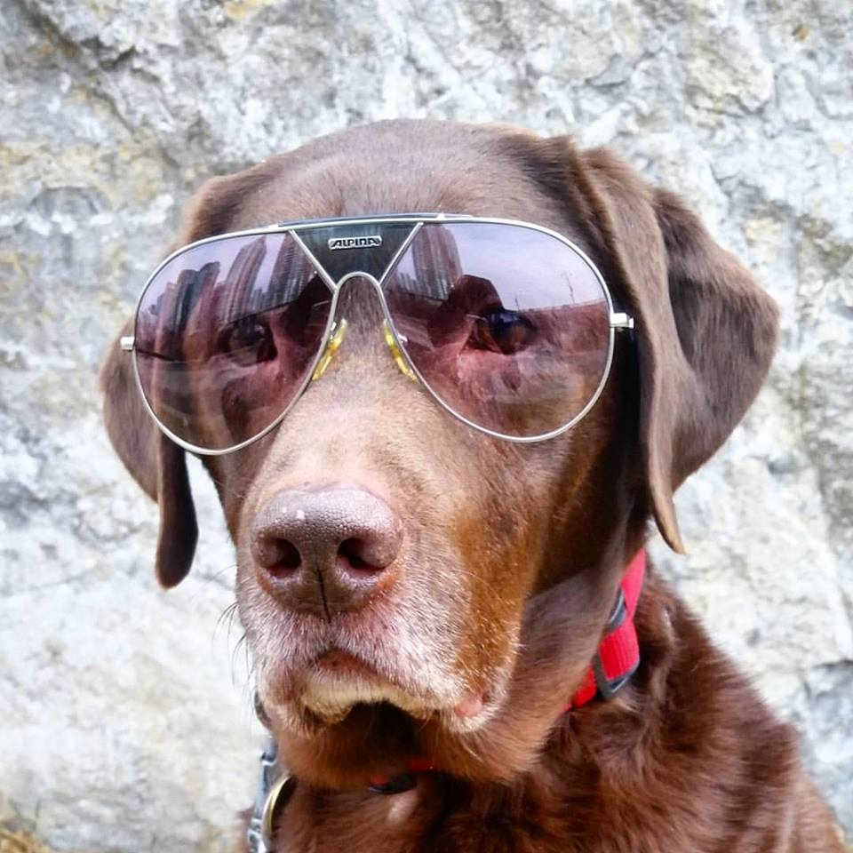 Woz from City Place Dogs Torronto wearing Alpina TR4 West Germany vintage sunglasses